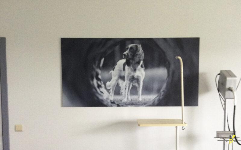 Anicura Liezele Indoor Signalisatie Publima 20